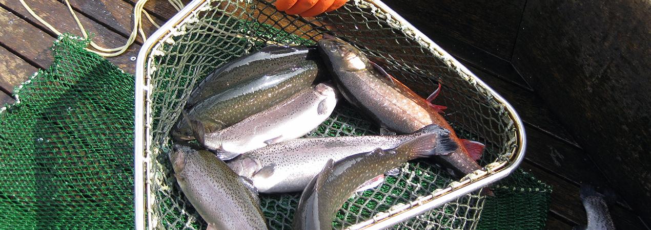 Lebendfisch Fischereihog Mueß